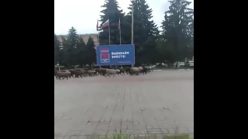 Видео от ПРАВОВЕДЪ Союза ССР