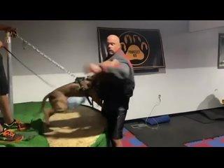 Видео от DogsFeCity   г. Железногорск Курская область