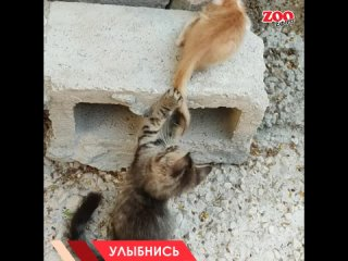 ЗООЭКСПРЕСС - сеть зоомаркетов kullanıcısından video