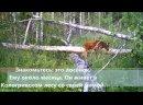 Видео от «Северная правда». Новости Костромы и области