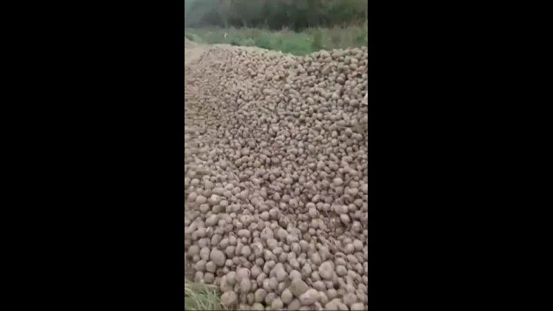 Свалка картофана
