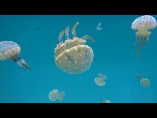 Aquarium Long Beach CA