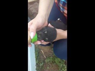 Видео от ПРИЮТ И ПЕРЕДЕРЖКА У ЕЛЕНЫ, Омская область