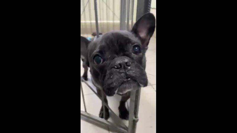 Видео от Марии Селуяновой 480p