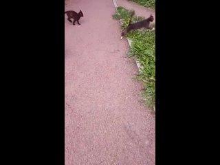 Video by Tatyana Malaschenko