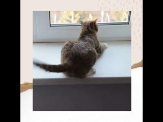 Video by КОШКА на ОКОШКЕ: защита на окна антикошка