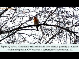 Видео от Одинцовский историко-краеведческий музей