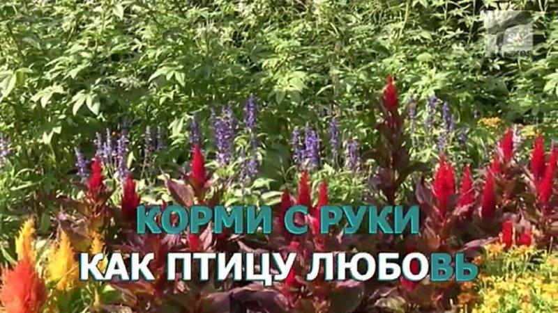 Иванушки International Реви Караоке
