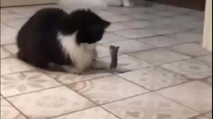 Отважный мышь