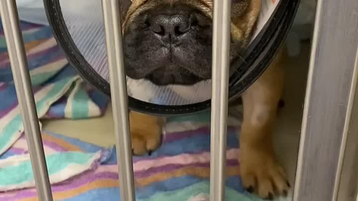 Видео от Ветеринарные клиники СитиВет