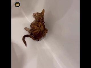 «Нажала смыв – начал вылезать кот»: у жительницы Л...