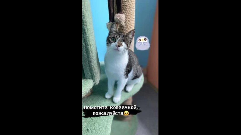 Видео от Общественный фонд защиты животных ДРУГ