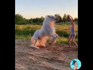 Восхитительный конь