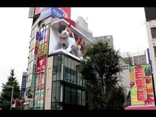 Классная уличная реклама с котиком в Японии.  Источник