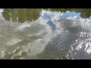Video by Alina Andreeva