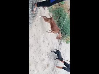 Видео от Азиза Мусаева