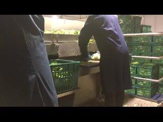 Видео от Работа в Великобритании | Сельское хозяйство