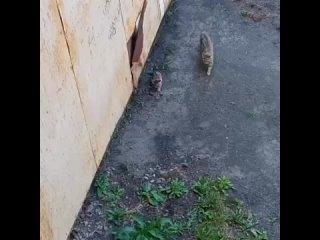 Помощь животным Камчатки kullanıcısından video
