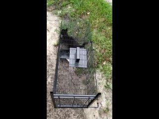 """Видео от Помощь бездомным животным """"ДОБРОЕ СЕРДЦЕ"""""""