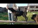 Видео от Надежды Деминой
