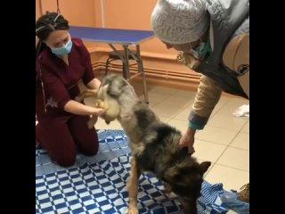 Инженер из Сибири сделал для парализованной собаки инвалидную коляску
