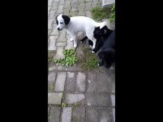 Видео от Надежды Елиной