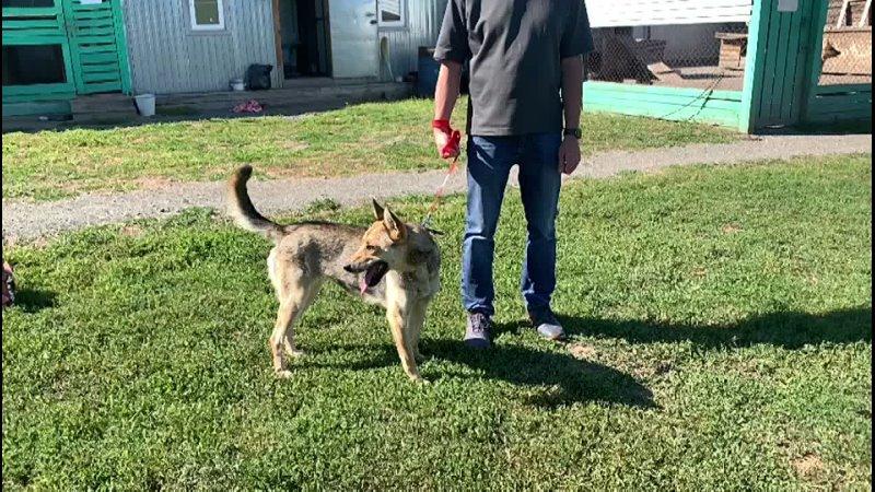 Видео от Приют для бездомных животных г Первоуральск