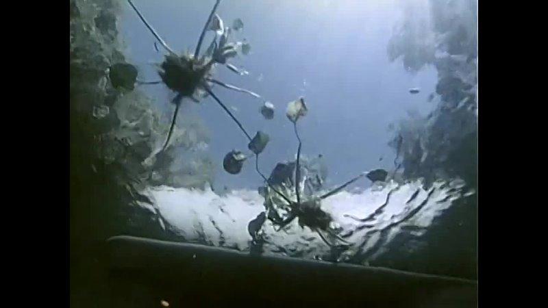 20 1971 Последние сирены Подводная одиссея команды Кусто 480 X 636