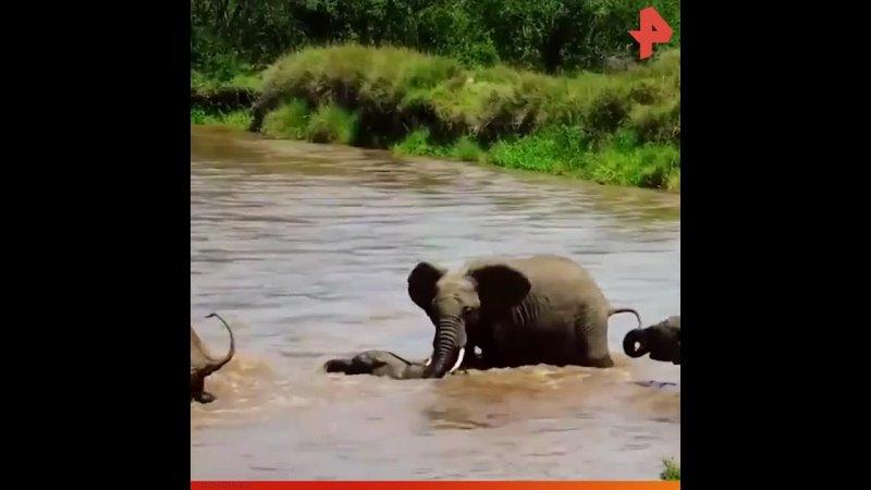 Слоненка унесло потоком РЕНТВ
