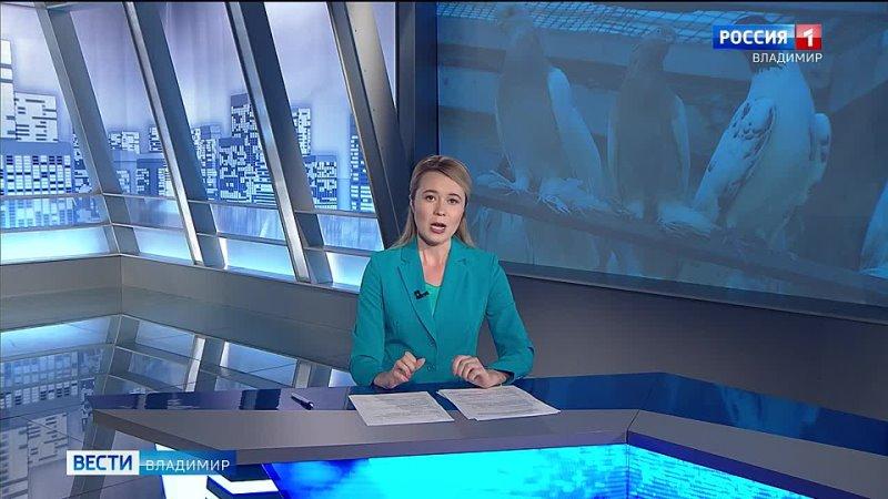 Во Владимире разводят иранских выставочных голубей mp4