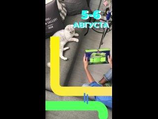 Yuleçka Holodnyaktan video