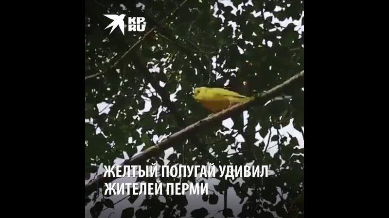 Видео от Марины Романовой