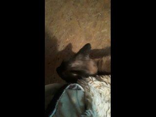 Video by Olga Tkacheva