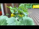 Видео от Перовский Парк