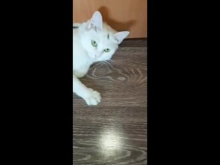 """Видео от """"КотикОдом"""" -бывшебездомные в поисках хозяев"""
