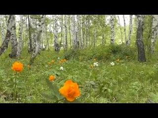 Каеннар -клип на песню Саида Абдуллина