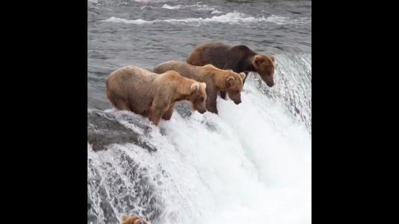 Чудесная природа Аляски