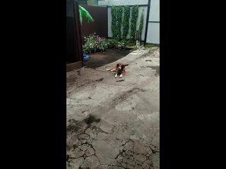 """Видео от """"ДОБРОЕ СЕРДЦЕ"""" г. Зеленогорск. Помощь животным"""