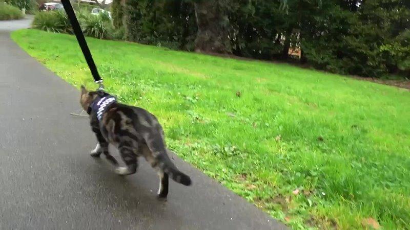 Полицейский кот из Новой Зеландии стал звездой соцсетей
