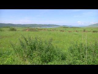 Vídeo de Шарыповский муниципальный округ