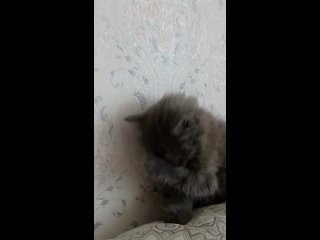 """""""Муха"""" кошки и собаки в добрые руки! kullanıcısından video"""