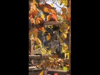 Видео от Мамы Республики Башкортостан.