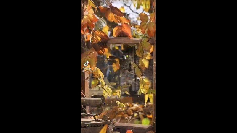 Видео от Мамы Республики Башкортостан