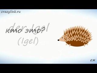 Животные на немецком. Дикие Животные. Часть 1