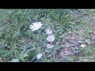 Цветы . Донской