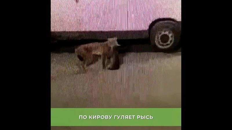Видео от Новости Кирова Первый городской канал в Кирове