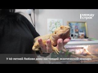 Тагильчане и их экзотические животные