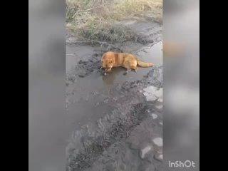 ЗооСфера Гуково kullanıcısından video
