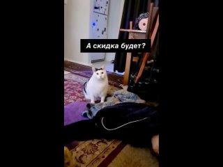 Привет от кота Бендера