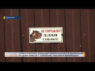Кольчугинского_зоозащитника_пытаются_выгнать_из_его_дома_вместе_с_собаками,_лисами_и_верблюдом.mp4